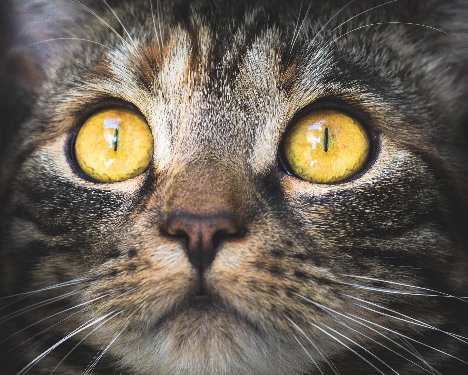 Katzenkostüm-farbige-Kontaktlinsen